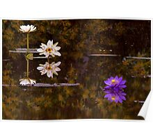 Reflected Wattle Poster