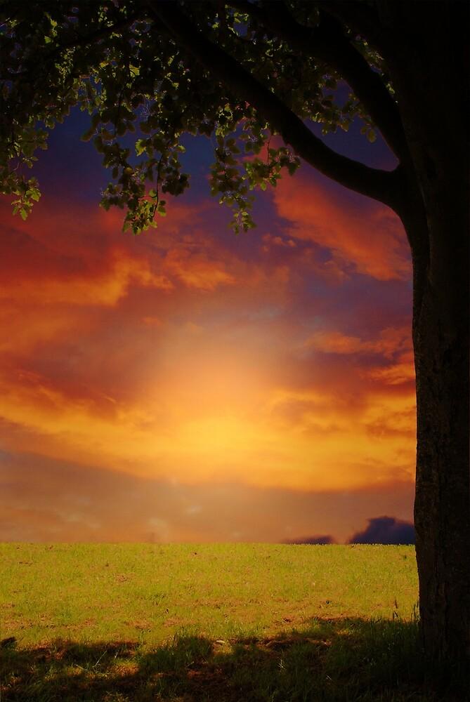 Serenity by Christine Lake