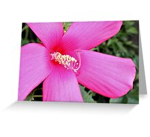 First Hibiscus - Daily Homework - Day 65 - July 12, 2012 Greeting Card