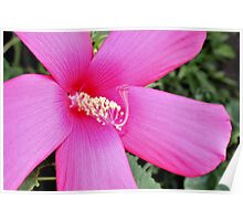 First Hibiscus - Daily Homework - Day 65 - July 12, 2012 Poster