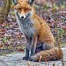 Scottish Farm and Wildlife by David Alexander Elder