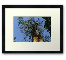 Into the tree Framed Print