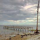 Along the Gulf Coast in the Panhandle of Florida by barnsis