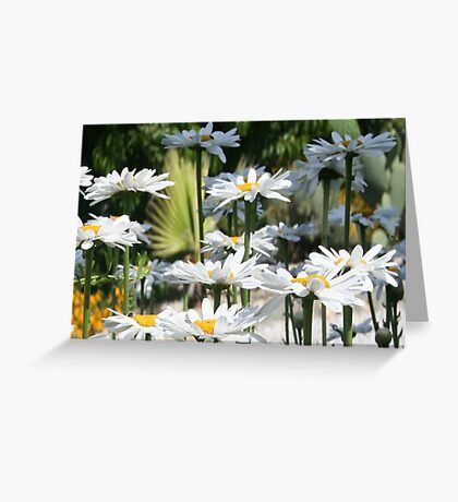 A Garden of White Daisy Flowers Greeting Card
