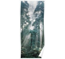 Forest Light II Poster