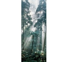 Forest Light II Photographic Print