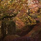 Autumn Track by Neil Bygrave (NATURELENS)