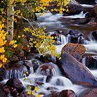 Autumn Zen by John  De Bord Photography