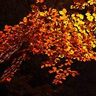 Autumn Beech by Neil Bygrave (NATURELENS)