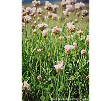 Flowers at Lands End Photographic Print