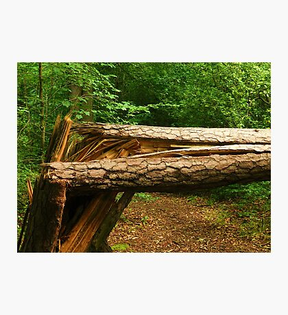 broken tree. Photographic Print