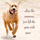 Live like someone left the gate wide open by Chris Perry