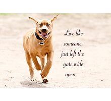 Live like someone left the gate wide open Photographic Print