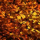 Autumn Beech Leaves by Neil Bygrave (NATURELENS)