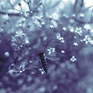 Baby's breath_02 by ciriva