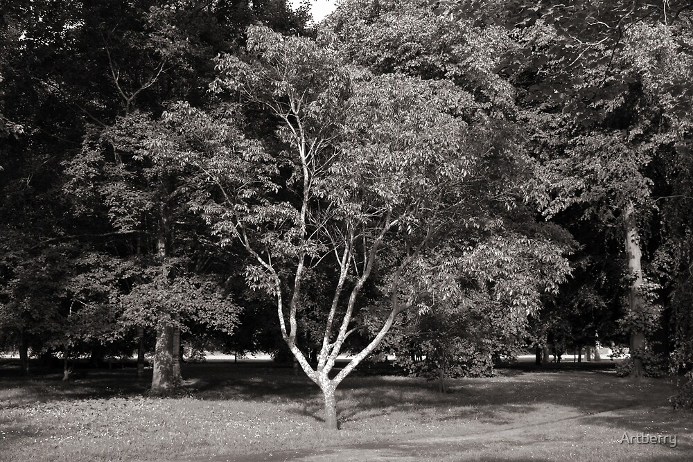 Magnolia Tree in Summer Warm Toned BW by Artberry