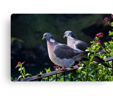 Wood Pigeons  Canvas Print