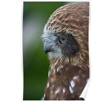 Kaya - Boobook Owl Poster