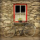 Molly's Bike by CliveOnBeara