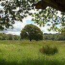 Oak in the meadow by CliveOnBeara