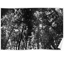 Woodland Canopy 01 BW Poster