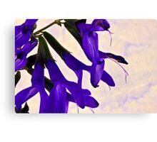 Blue Angel Sage Macro  Canvas Print