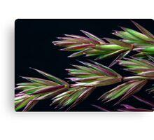 Grass Seed Macro Canvas Print