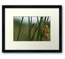 The hair on my back is standing! Framed Print