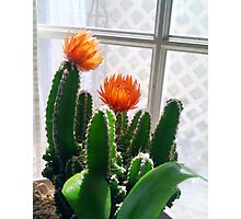 Blooming Cactus Photographic Print