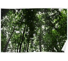 Woodland Canopy 01 Poster
