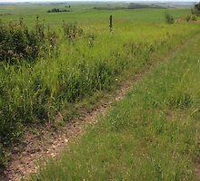Prairie Roads by Jim Sauchyn