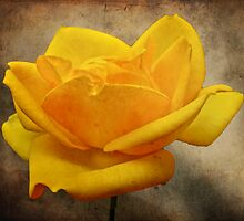 Enigma Of The Yellow Rose #2 by MotherNature