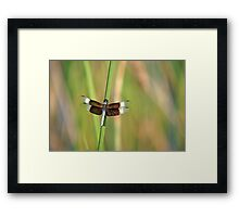 Widow Skimmer Framed Print