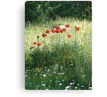 POPPIES AND DAISIES - OLD BOULDER CYN ROAD Canvas Print