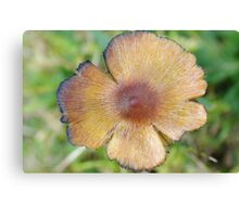 Top of a Toadstool Canvas Print