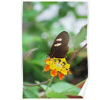 Butterfly 10 Poster