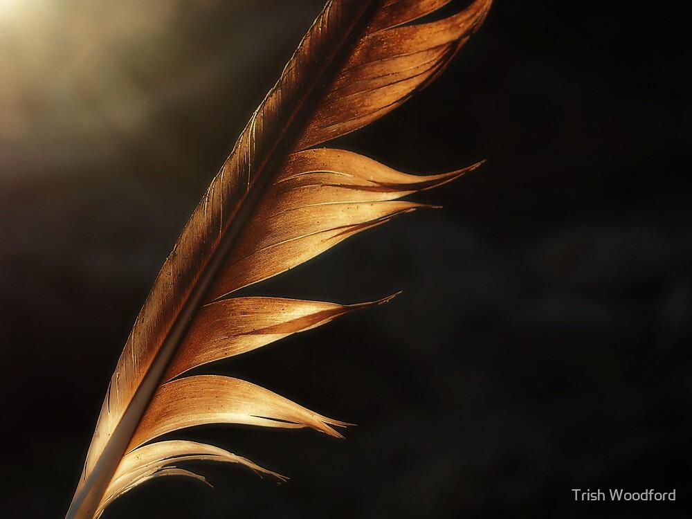 Ablaze by Trish Woodford