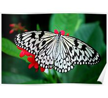 Butterfly 24 Poster