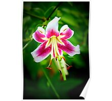 Star Lily in Hyper Color Poster