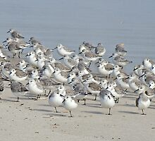 Peeps at the Beach #1 by MotherNature