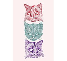 Three Cats Photographic Print