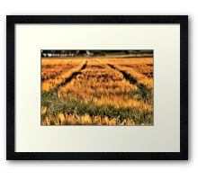 Bed of Corn Framed Print