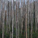 Snow Forest Blur by Greg Carrick