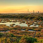 Golden Light on the Williamstown Wetlands by Chris Mitchell