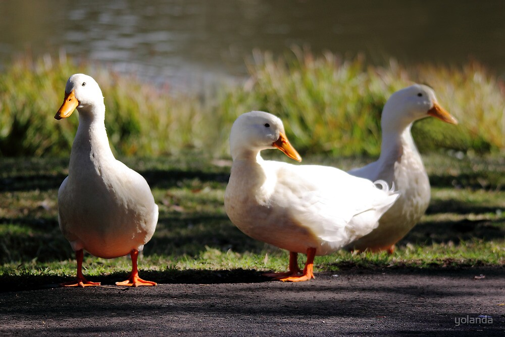 Three Little Ducks by yolanda