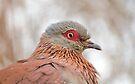 I love birds by Elizabeth Kendall