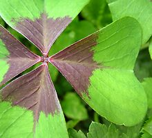 Oxalis by wishfulTpress