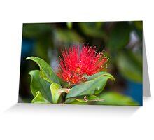 Australian Bottle Brush - Bundaberg - Australia Greeting Card