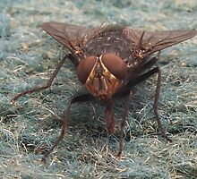 The Fly. by albutross