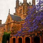 Jacaranda University by Michael Matthews